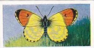 Swettenhams Tea Vintage Trade Card Butterflies & Moths 1958 No 5 Eastern Oran...