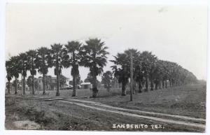 Rare View Along Palm Avenue San Benito TX RPPC Real Photo Postcard