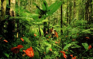 Hawaii Giant Tree Ferns and Red Anthurium