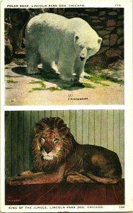 Vtg Carte Postale Chicago Illinois Il Lincoln Park Zoo Polar Bear Et Lion Multi
