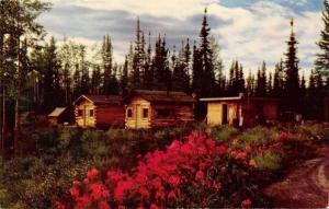 Border City Alaska~Canadian Boundary~1950s Postcard