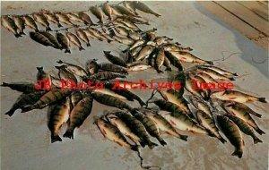WI, Door County, Wisconsin, Fishing, Yellow Perch, Dexter Press No 96051B