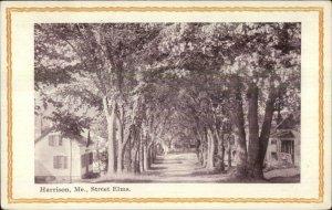 Harrison ME Street Elm Trees c1910 Postcard