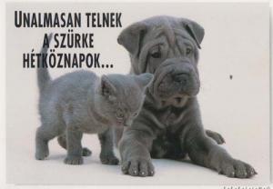 Cat With Hungary Hungarian Bulldog Dog Love Romance Photo Postcard