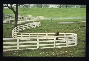 Lexington, Kentucky/KY Postcard, White Fencees/Horse, Kentucky Horse Park
