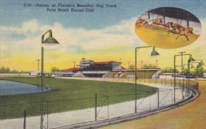 Florida Palm Beach Greyhound Racing At Palm Beach Kennel Club Curteich