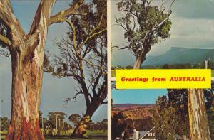 Gum Trees, Rural Scene & Country Farmhouse, Greetings from Australia, 50-70s