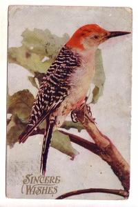 Closeup of Lovely Red Crested Bird on  Branch, Wishes, Split Ring Cancel, Spr...