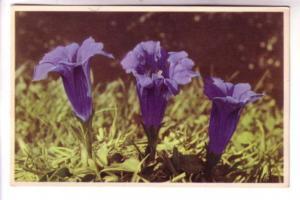 Flower Series, Gentiana, Colonrint B 52106, Printed in Belgium