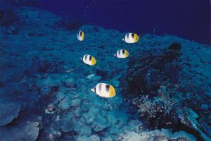 MIcronesia Pohnpei Underwater Scene