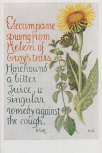 Helen Of Troy Flower Coughing Cough Natural Remedy Song Songcard Postcard