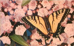 Greetings From East Union Indiana~Butterfly and Flowers~1950's Postcard