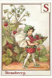The Strawberry Fairy , 1995