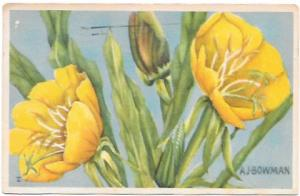 Painting of Primroses, sent from Los Angeles, Calif. 1957 Stamp #1033 Jefferson