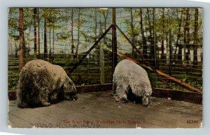 Toledo OH, The Polar Bears, Walbridge Park, Vintage Ohio Postcard