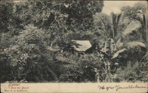 Indomesia - Djember Huis ten Bosch c1905 Postcard