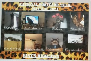Postcard: Binx Hijinks-National PC Week, 2021, Jane Hepner #58/100