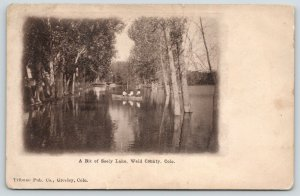 Greeley~Weld County Colorado~Trees in Seely Lake~Three Ladies Rowboating~c1910