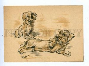 195789 GERMANY Schnauzer dogs by FIEBER Vintage postcard