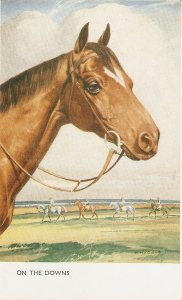 Whyadla. Horse. On the Downs  Nice vintage Salmon Postcard
