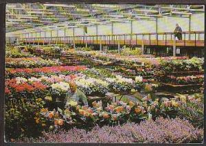 Potted Plant Halls Aalsmer Netherlands  Postcard BIN