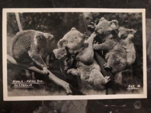 Mint Australia Real Picture Postcard Koala Mom Native Bear