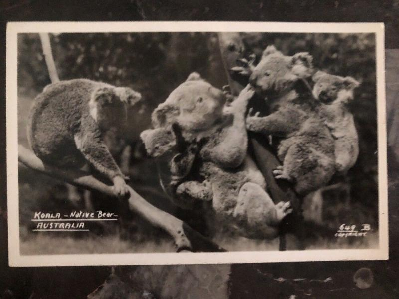 Mint Australia Real Picture Postcard Koala Mom Native Bear