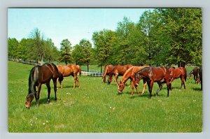 Lexington KY-Kentucky, Horses Grazing At Horse Farm, Chrome Postcard