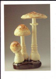 Panther Agaric Mushroom, Ceramic, Nova Scotia Museum Natural History, Halifax,