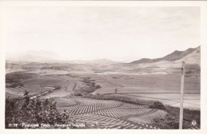 Hawaiian Islands Pineapple Fields Real Photo sk1611