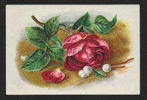 VICTORIAN TRADE CARD Petzelt's Pharmacy