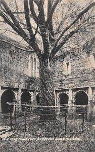 Yew Tree Cloisters Muckross Abbey Killarney Ireland Unused