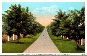 Florida Davenport Hibiscus Avenue Through Holly Hill Groves