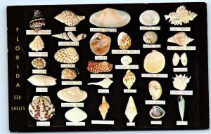 *1965 Florida Beach Sea Shells Identification ID old Vintage Postcard Posted B52