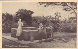 Donkey , Waterput in een Buitendistrict, N.A. , 20-30s ; Curacao, N.W.I.