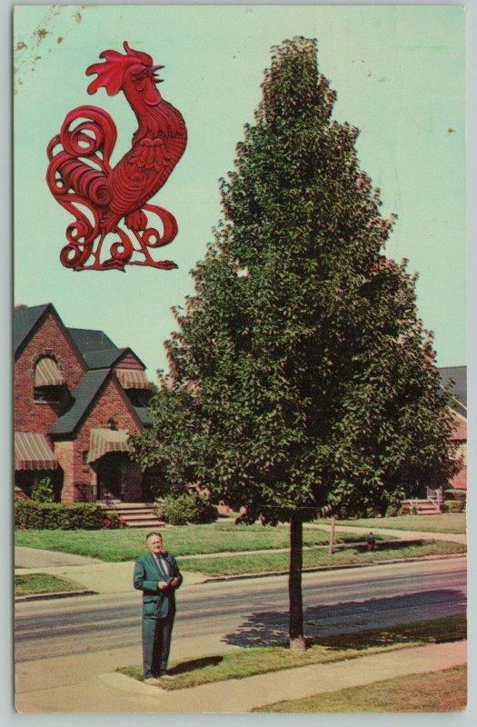 Olmsted Falls Ohio~Edward Scanlon Tailored Tree~Chanticleer Pear~1965 Adv PC