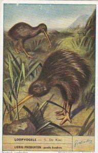 Liebig Trade Card S1580 Birds That Can't Fly No 5 Kiwi