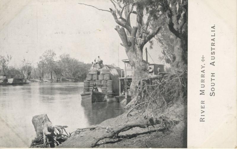 River Murray South Australia AU Murray River Vintage Unused Postcard E4