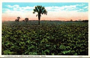 Texas Lower Rio Grande Valley Typical Cabbage Field Curteich
