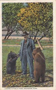 Bears A Scene In Public Park Rochester Minnesota 1919