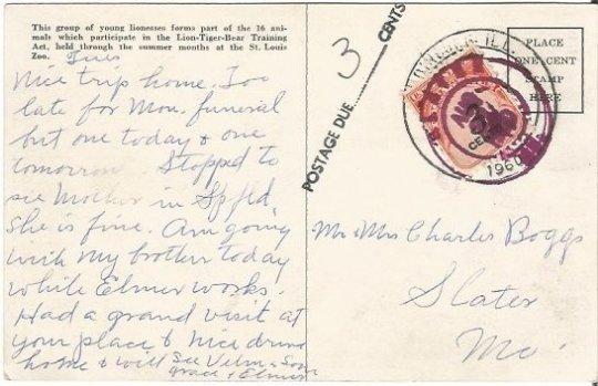 Animal Training St. Louis Zoo Lionesses Lions 1944 Vintage Postcard