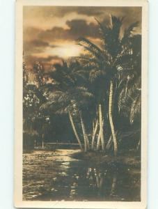 rppc 1920's PALM TREES - PROBABLY IN HAWAII OR FLORIDA AC7878