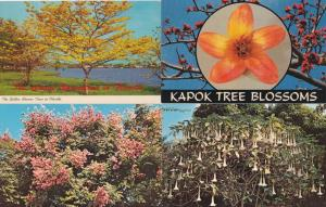 (4 cards) Flowering Trees of Florida - Golden Shower and Golden Rain Trees