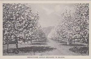 West Virginia Wenatchee Apple Orchard In Bloom Albertype