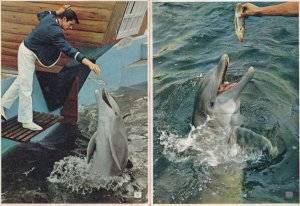 Bottle Nosed Dolphin Marineland 2x 1950s Postcard s