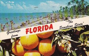 Greetings From Florida The Sunshine State 1961