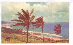 Bathsheba Coast , Barbados, B.W.I., 40-60s