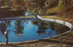 Blue Springs Eureka Springs Arkansas Ozarks