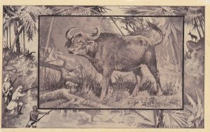 African Buffalo , 00-10s