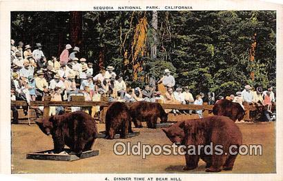 Bear Hill Sequoia National Park, California Postcard Post Card Sequoia Nation...